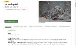 Burrowing owl species page