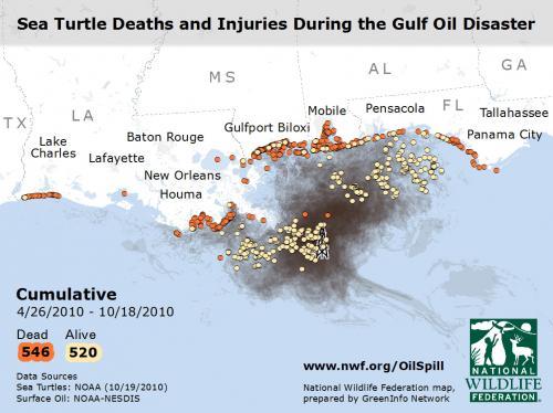 Turtles- Cumulative Spill Impacts Video