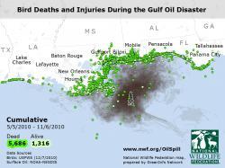 Birds - Cumulative Spill Impacts Video