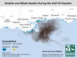 Screen Shot of Video on Mammal Impacts of Gulf Oil Spill