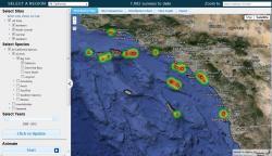 Basic Reef Check Web Map Interface