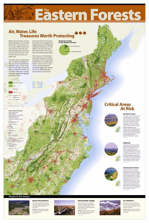 Eastern Forest Poster