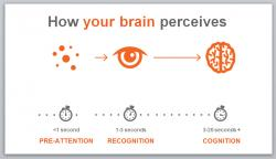 Visual Perception Slide