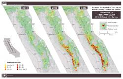 US Forest Service map of Sierra-wide tree mortality